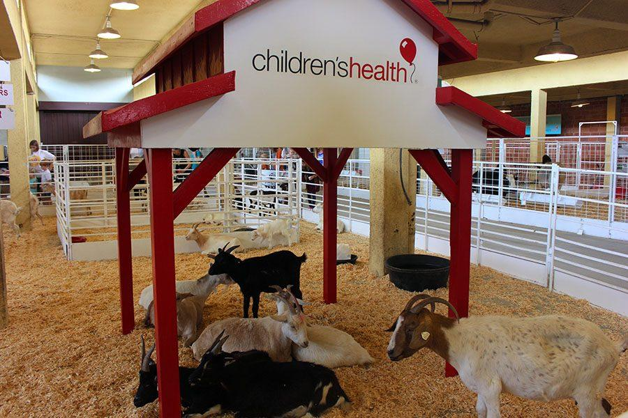 Childrens Health hosts a petting zoo for families to experience animals up close.