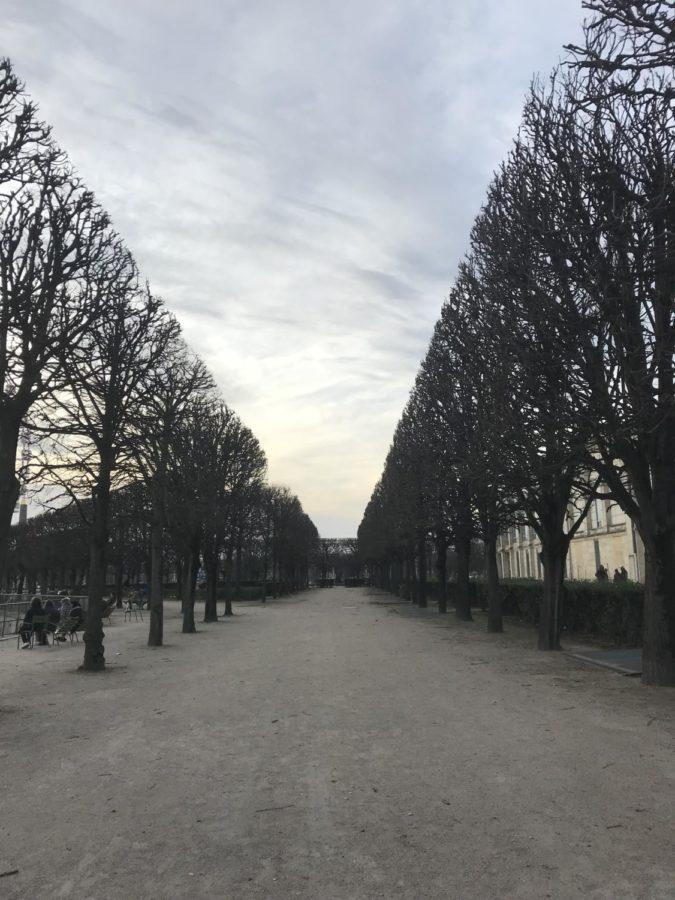 french trees